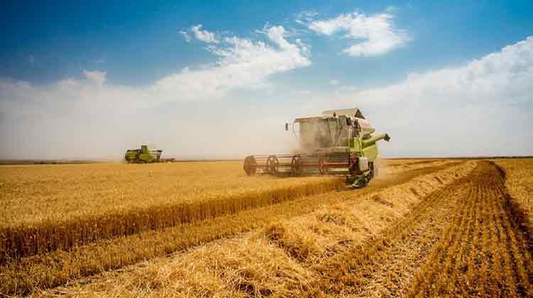تولید گندم به ۱۰ میلیون تن میرسد/ نرخ هر کیلو آرد ۴ هزار تومان